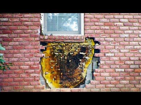 سمعوا صوتا غريبا يأتي من جدار المنزل وعندما قاموا بإزالة الطوب من الحائط وجدوا شيئ لا يصدق  - نشر قبل 12 ساعة