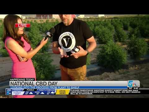 VIDEO - Inside Look at how CBD Oil is Made