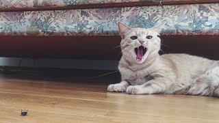 Cat Kills