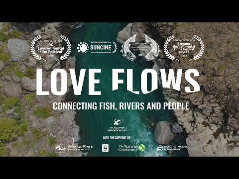LOVE FLOWS World Fish Migration Day Documentary Featuring Jasper Pääkkönen And Zeb Hogan