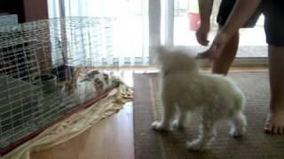 Pheobie Canine Freestyle thumbnail