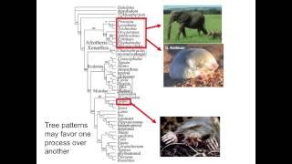 Dr. Robert Asher, University of Cambridge, Department of Zoology