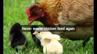Chicken Feeders | hens |San Benito|CA | automatic chicken feeder | feeding chickens| poultry feeders