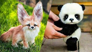 CUTEST BABY ANIMALS THAT WILL MAKE YOUR DAY!