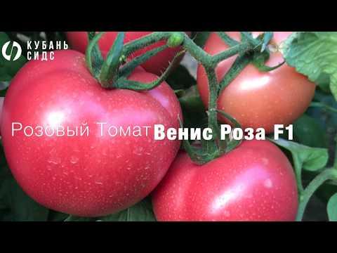 Розовый Томат - Венис Роза F1