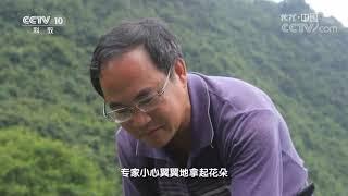 《地理中国》 20190930 水中奇花| CCTV科教