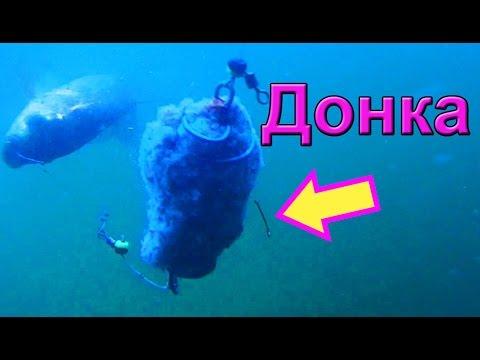 подводная съемка ловли сома на донку