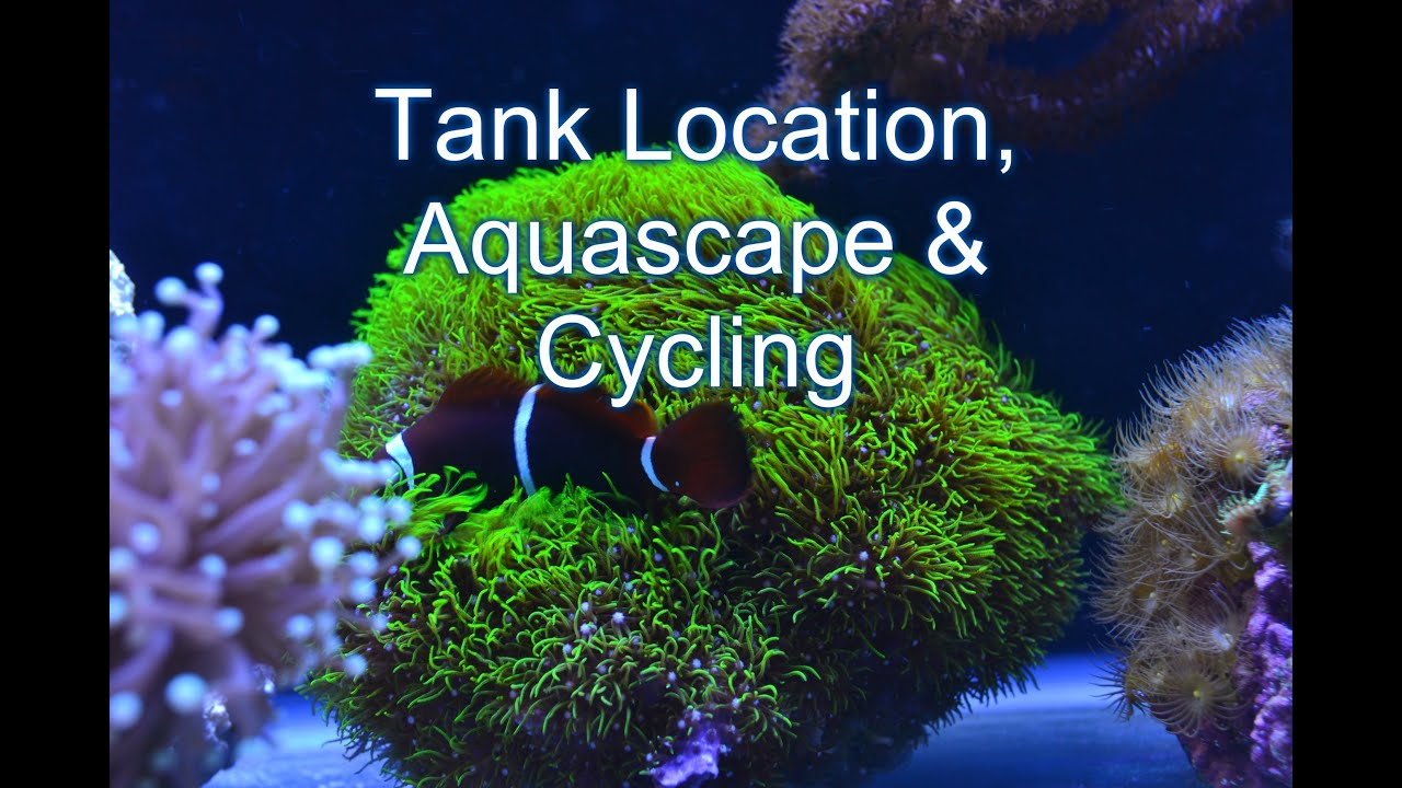Tank Location, Aquascape U0026 Cycling | Beginner Guide To Saltwater Aquariums    YouTube