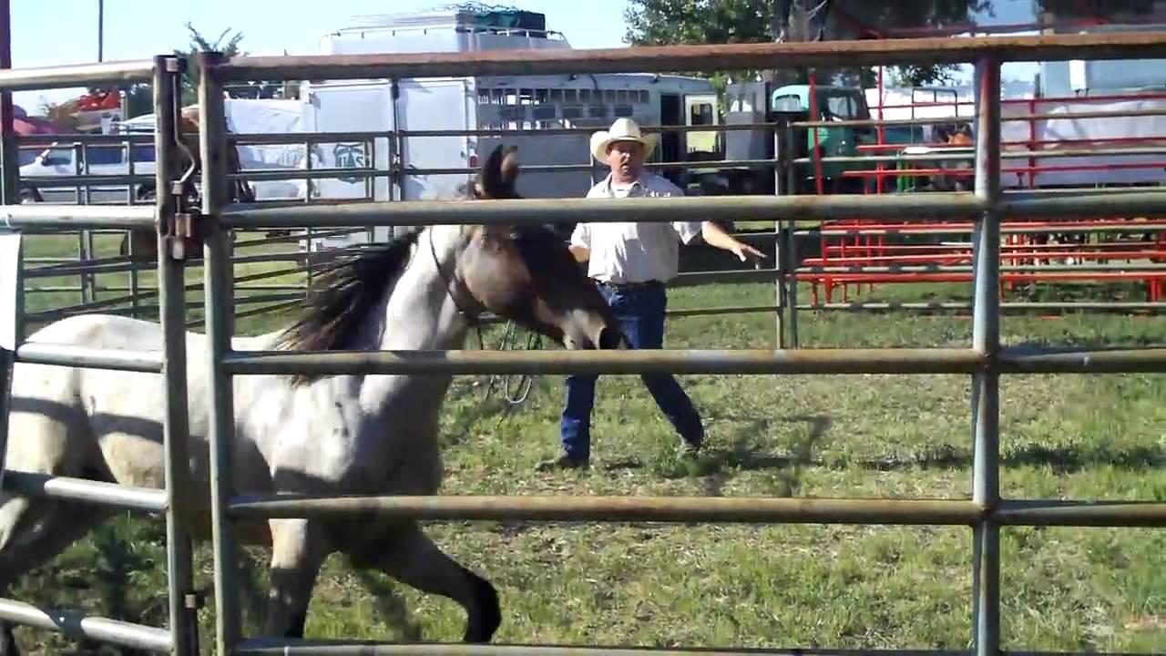 Horse Training using a test dummy - YouTube |Horse Training