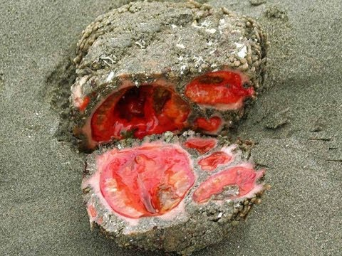 A LIVING ROCK? -- Mind Blow 69