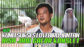 Download lagu KUNCI SUKSES CETAK LOVEBIRD JANTAN KONSLET DARI BAHAN SAMPAI PENJODOHAN