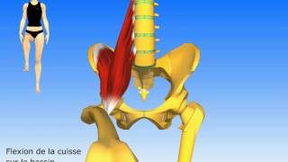 muscle ilio psoas
