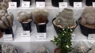 姫路市手柄山温室植物園で9月27日から10月13日まで秋のサボテンと多肉...