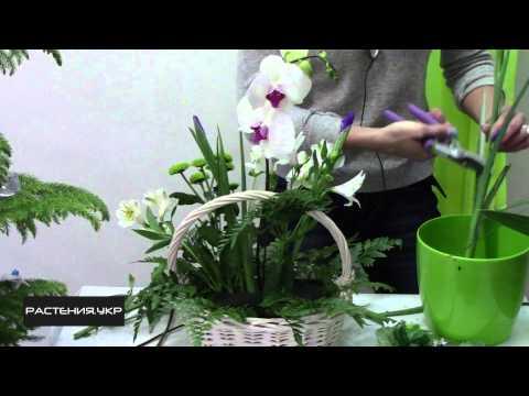 Доставка цветов заказать недорого в Санкт Петербурге