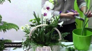 Как сделать композицию из  живых цветов своими руками ? / How to make a flower arrangement?