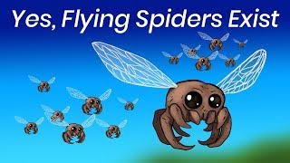 What If Spiders Had Wings?