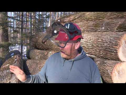 draft horse logging wisconsin ash
