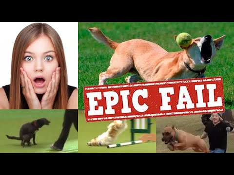 Top 10 Dog Training Fails & Bloopers
