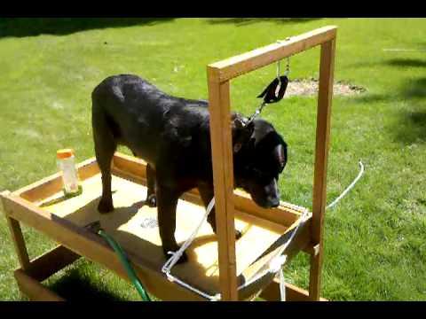 Dog wash station 3 next youtube for Diy dog bathing system