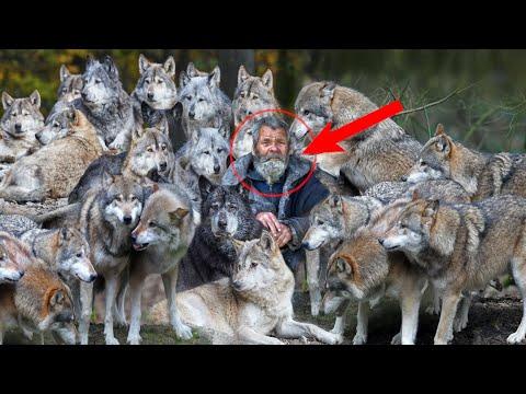 Старик приютил стаю волков и спас их от голода. И вот как они отблагодарили его в дальнейшем...