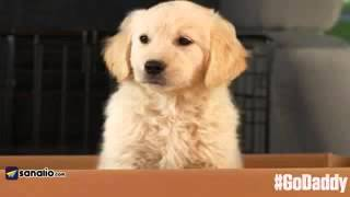 """godaddy outrages dog lovers with """"puppy mill"""" Super Bowl tv commercial"""