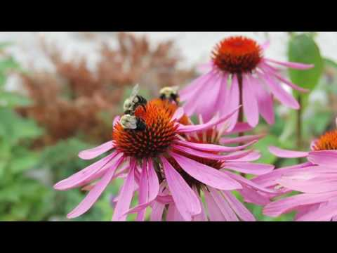 Eco-Tips: Pollinators