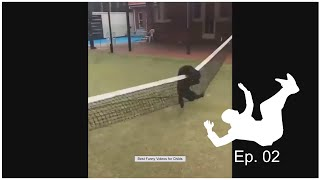 Fail and Funny Moments Of Animals - Best of 2020