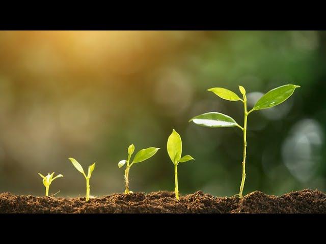 Rast na Božiu slávu