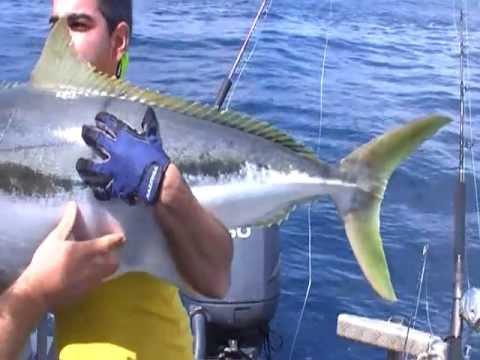 36.52kg MONSTER Yellowtail Kingfish In Tairua, New Zealand On EPIC ADVENTURES