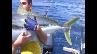 36.52kg MONSTER Yellowtail Kingfish in Tairua, New Zealand on EPIC ADVENTURES
