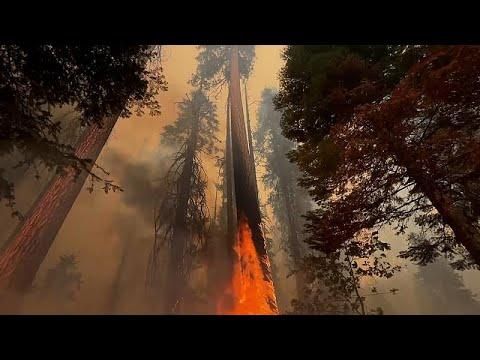 شاهد: رجال الإطفاء يصارعون من أجل حماية البساتين من حرائق كاليفورنيا…  - نشر قبل 2 ساعة
