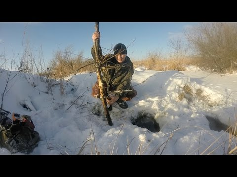 ловить бобра капканами кп-250