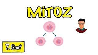 mitoz-blnme-7-snf-quotgncelquot