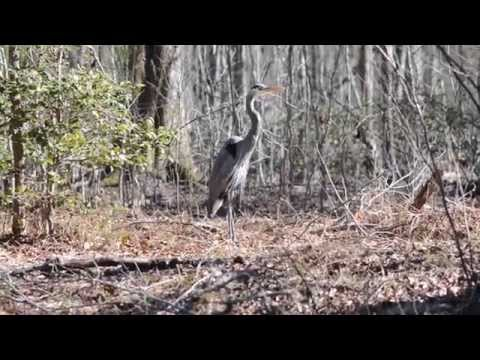 2015 Maryville College Wildlife Photography