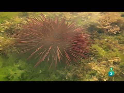 flysch.-el-susurro-de-las-rocas-(geologia)- -documental