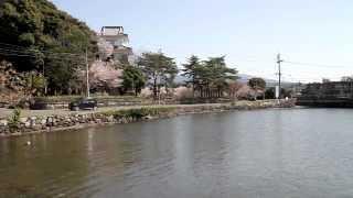 長崎県 大村公園の桜 その2