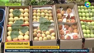 Абрикосовый рай: армянские фермеры привезли в Москву свежий урожай - МИР24