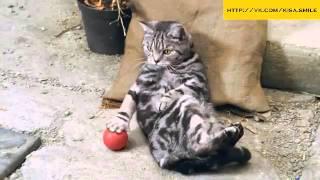 Прикольная реклама молока Kisa Smile Прикольные фото и видео с кошками.mp4