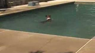 Dog Swims To Bottom Of Pool!