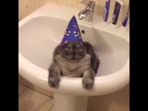Harry Potter Cat