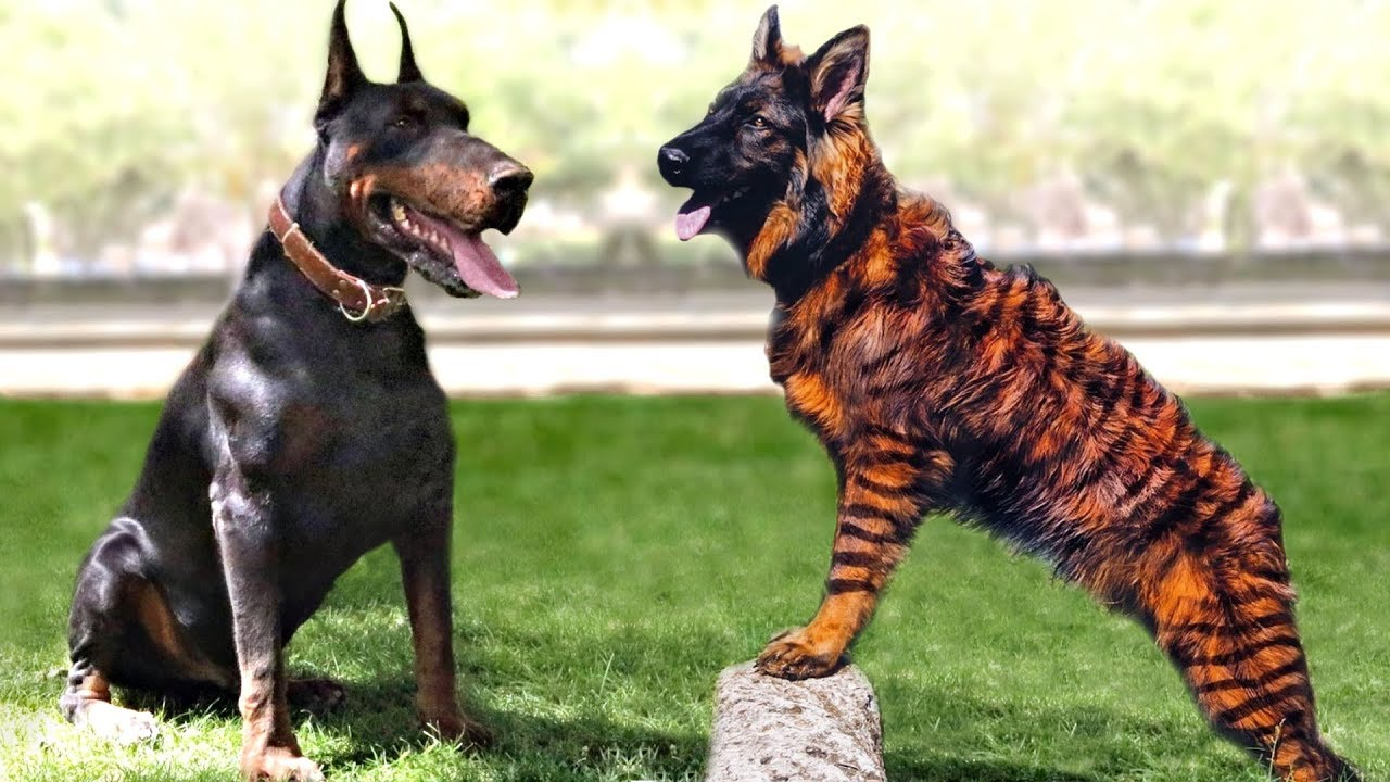 These Are 10 Scariest Looking Dog Breeds - YouTube
