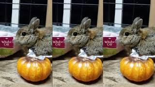 Pet Animal - Rabbits for Kids - Funny Rabbit Videos Compilation ទន្សាយ #3