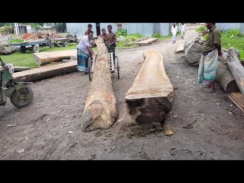 Very Dangerous to Maintain These Teak Wood for Cutting।Sawmill Cutting Huge Log Very Dangerous Way