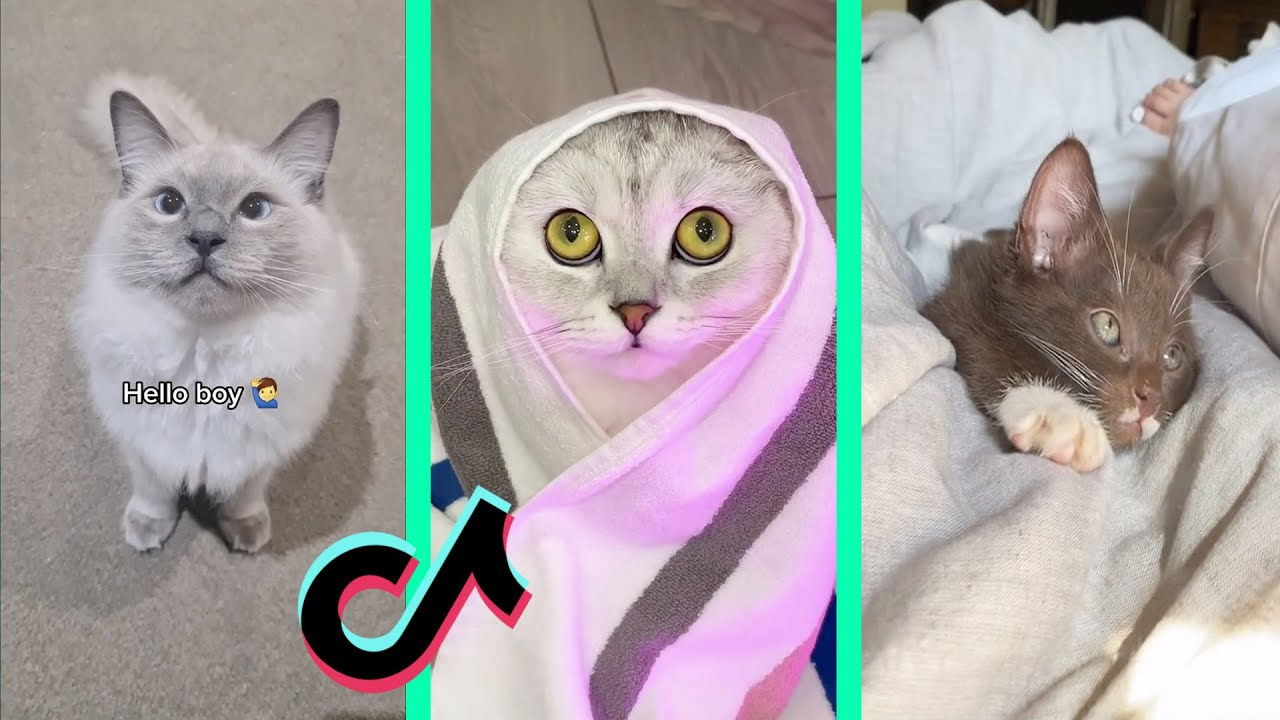 Here comes the boy, Hello boy, Welcome tiktok cat compilation