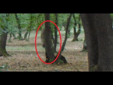 Padurea Hoia-Baciu | Fenomene Stranii In Romania