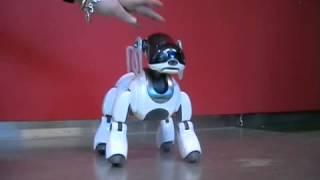 Робот-собака и кибер-кот