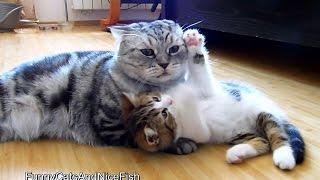 先輩ネコにぴったりくっついて甘える子ネコ