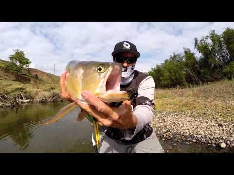 fly fishing aussie bass and saratoga