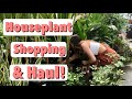 Houseplant Shopping at Walmart, Lowe's, & Home Depot! Big Box Store Indoor Plant Haul!