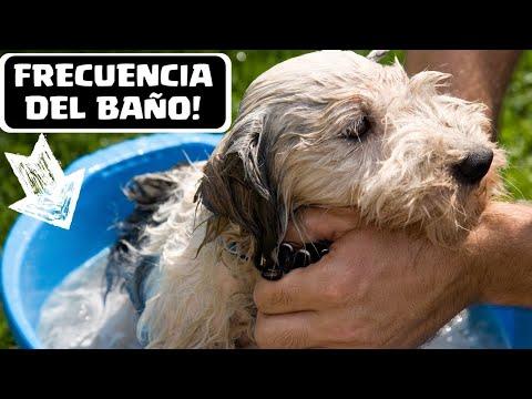 Cada cuanto se ba a un perro la frecuencia ideal para - Cuando se puede banar a un perro ...